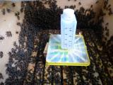Ameisensäure gegen Krankheiten