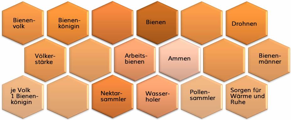Bienenkunde, Bienenwaben