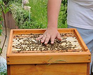 Bienengift, Sanftmut, Wabenstedt