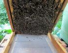 Imker, Bienen, Kippkontrolle