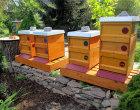 Bienenstand im Imkergarten