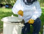 Bienenschwarm eingefangen
