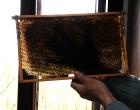 Bienenwabe aussondern