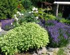 Bienenweide Kräutergarten
