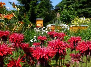 Bienenweide und Imkergarten Radig